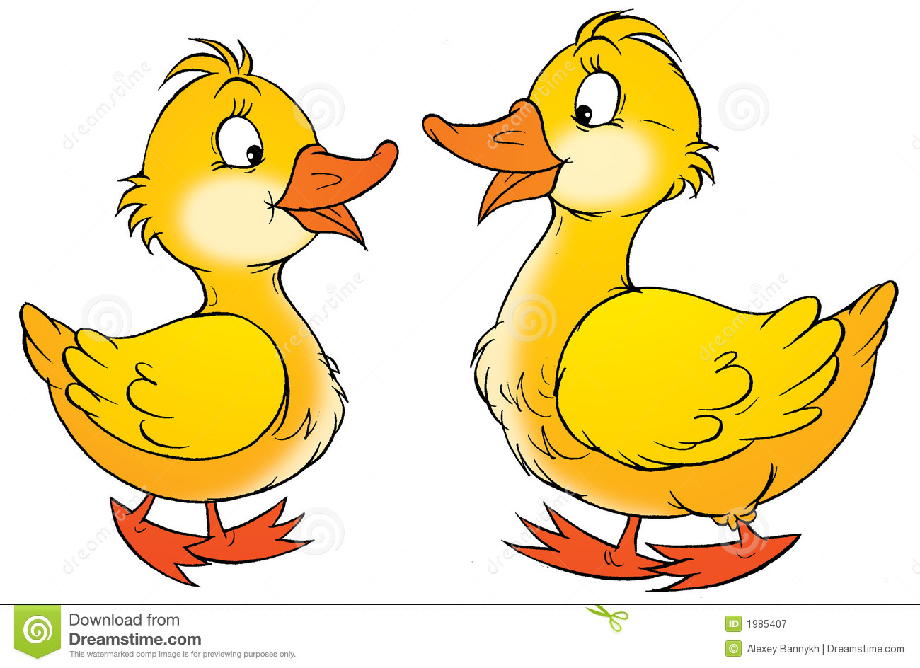 Ducks Stock Illustrations.