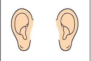 Two ears clipart 1 » Clipart Portal.