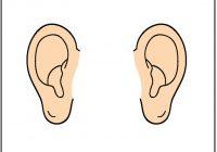 Ears Clipart.