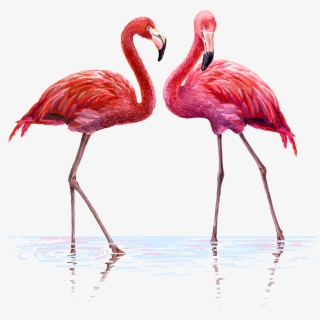 PNG Flamingo Cliparts & Cartoons Free Download , Page 2.