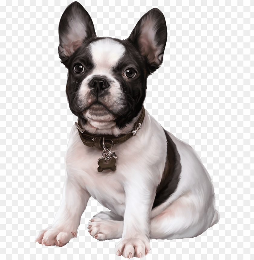 french bulldog, puppy images, clip art, cute dogs,.