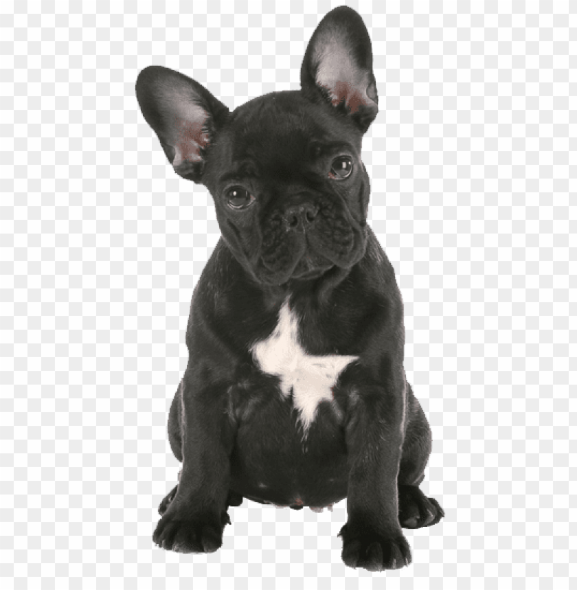 Download french bulldog png png images background.