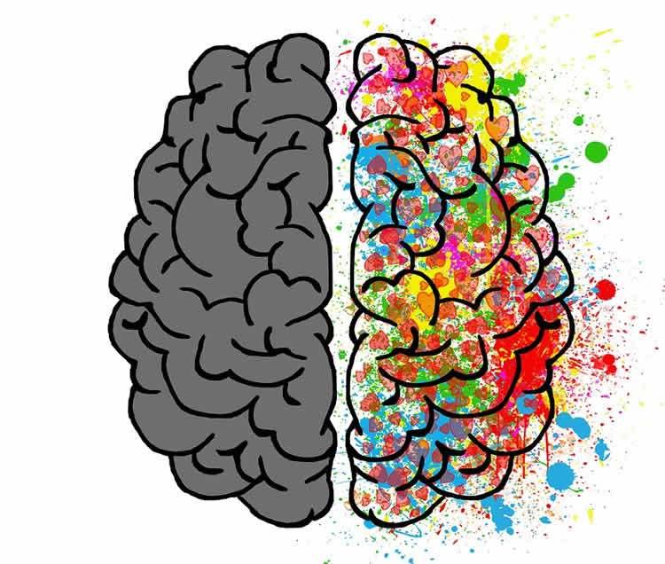 Discovery of Developmental Split Brain Syndrome.