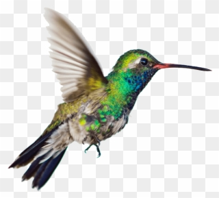 Free PNG Hummingbird Clip Art Download , Page 2.