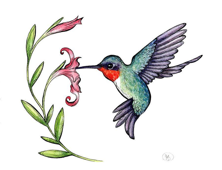 Free hummingbird clipart pictures clipartix 2.