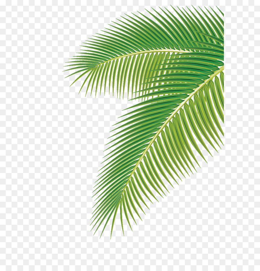 Palm tree leaves clipart 2 » Clipart Station.