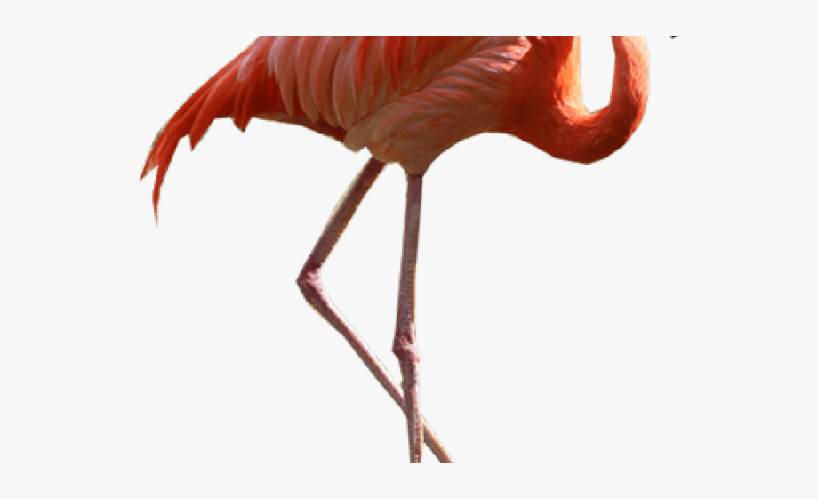 Flamingo Clipart 2 Legged Animal.