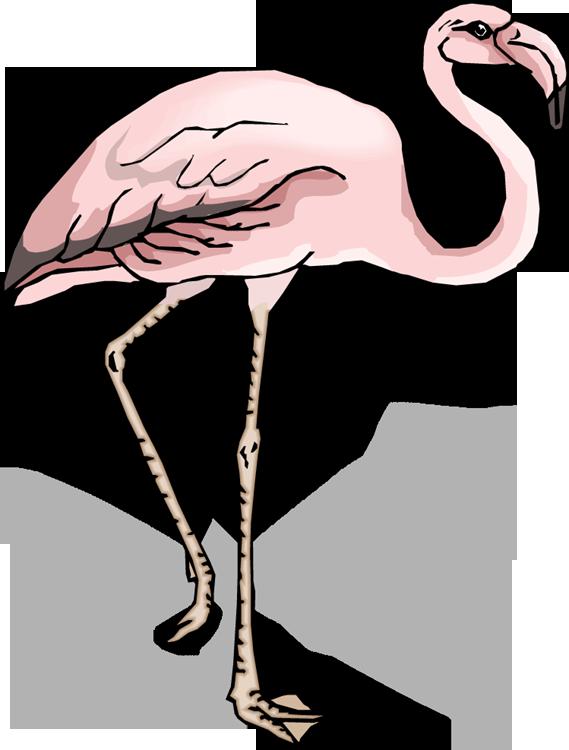Flamingo clipart 2 legged animal, Flamingo 2 legged animal.