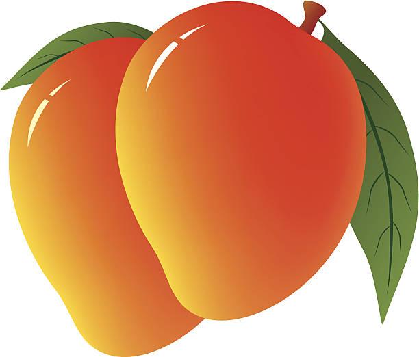 Mangoes Clipart.