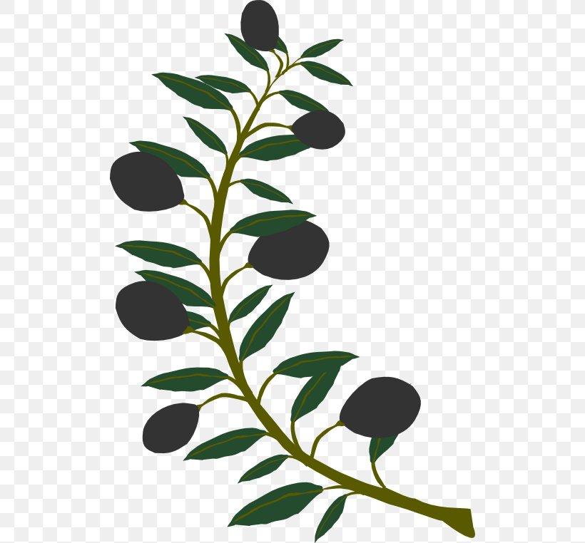 Olive Branch Clip Art, PNG, 512x762px, Olive Branch, Branch.