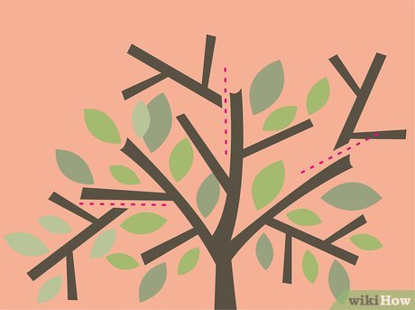 How to Prune an Olive Tree: 14 Steps (with Pictures).