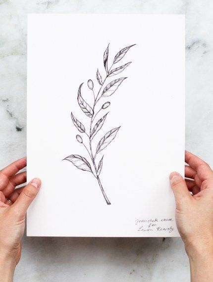 olive branch line drawing, illustration of an alive branch.