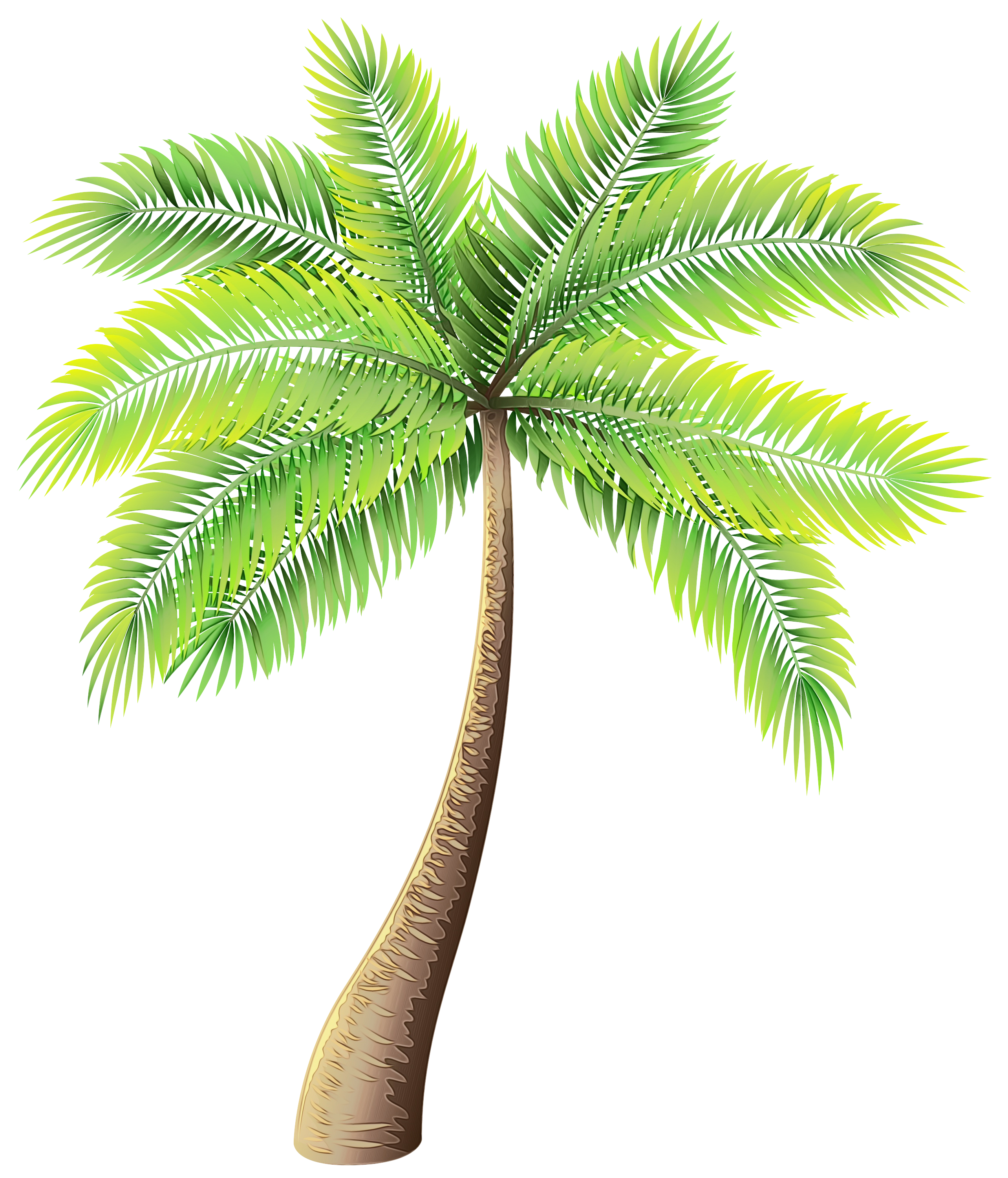 Clip art Palm trees Portable Network Graphics Image Vector.