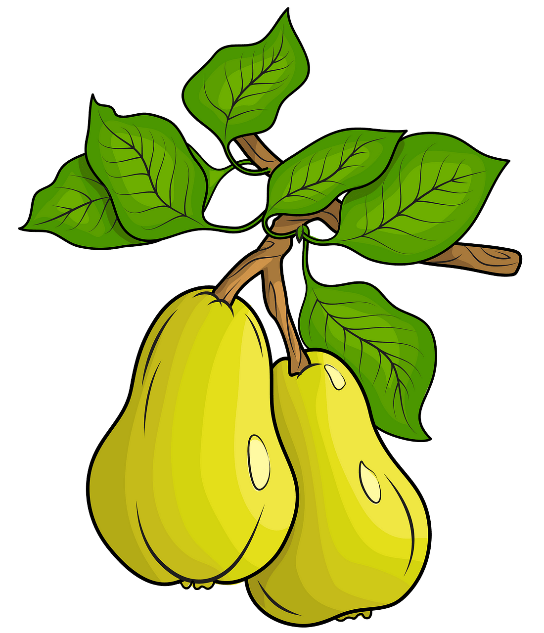 Two Pears clipart. Free download..