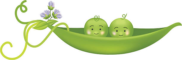Two Peas In A Pod Illustrations, Royalty.