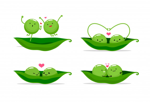 Two peas in a pod. vector illustration Vector.