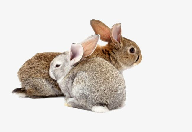 2 Small Rabbit PNG, Clipart, 2 Clipart, 2 Clipart, Animal.