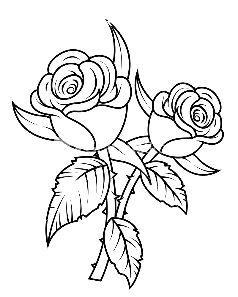 13381 Rose free clipart.
