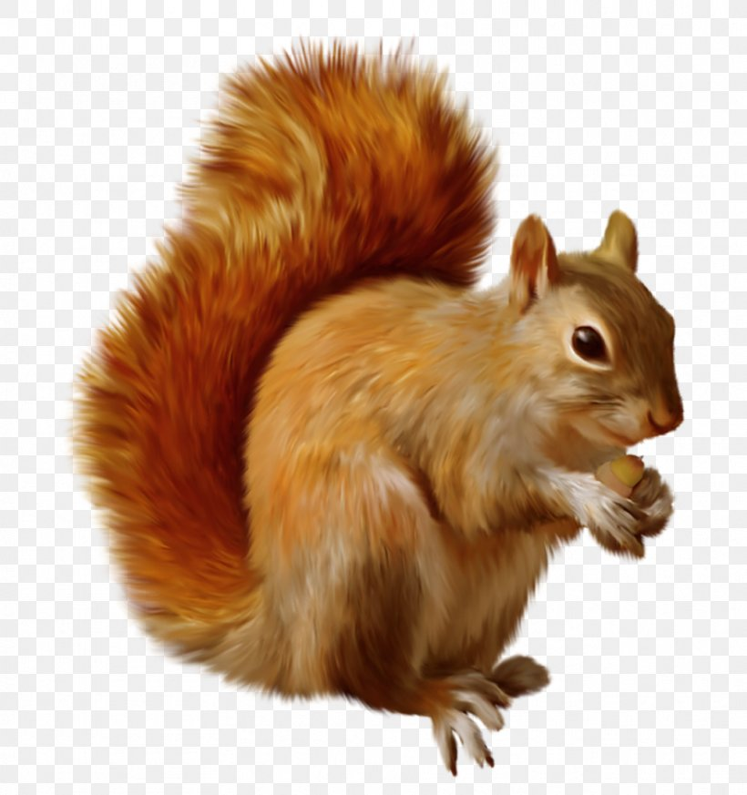 Red Squirrel Chipmunk Clip Art, PNG, 883x941px, Chipmunk.