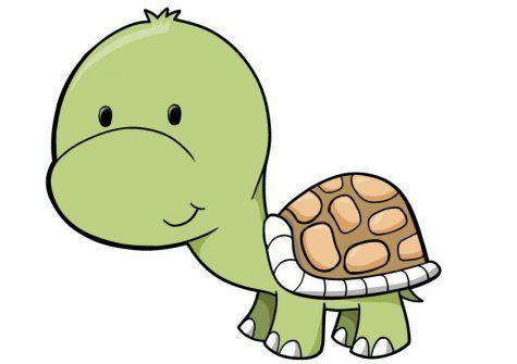 Cute Baby Turtle.