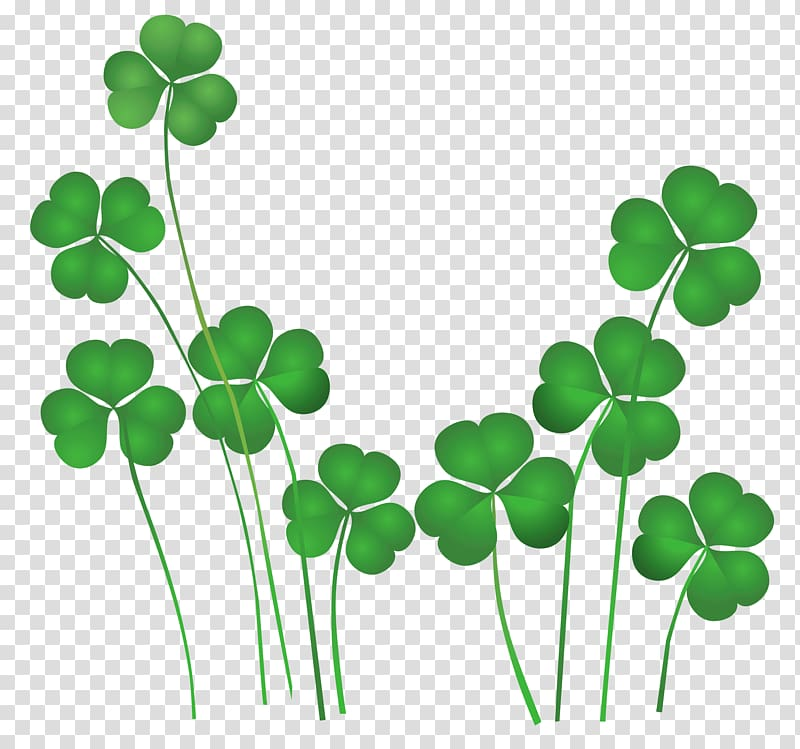 Green leaves illustration, St Patrick\'s Day Shamrocks.