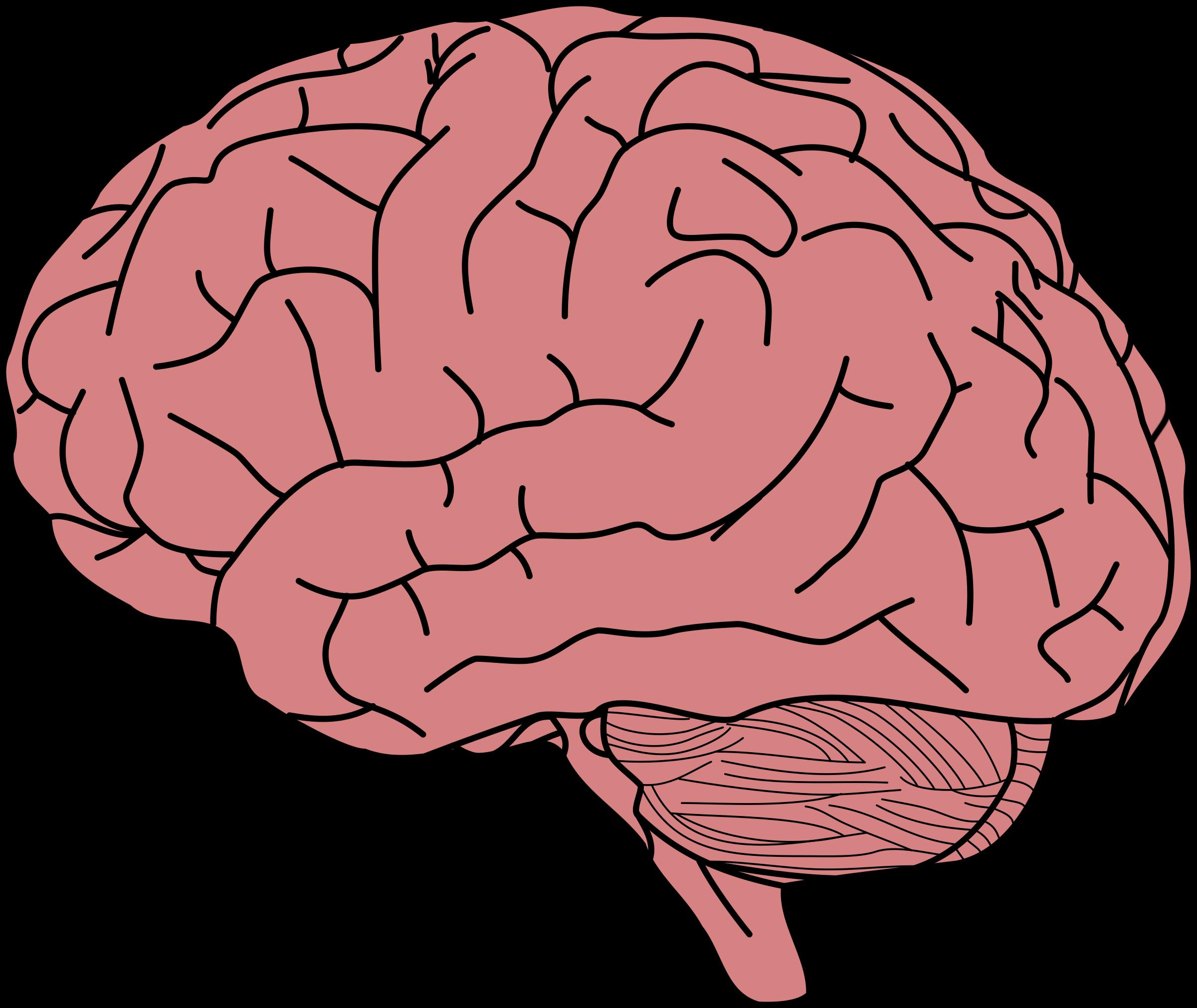 Human brain Memory Clip art.