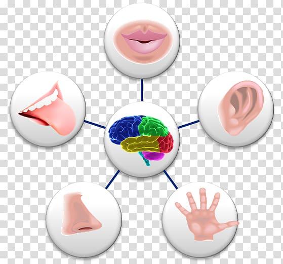 Sense Perception Sensory nervous system Sara Valentine.