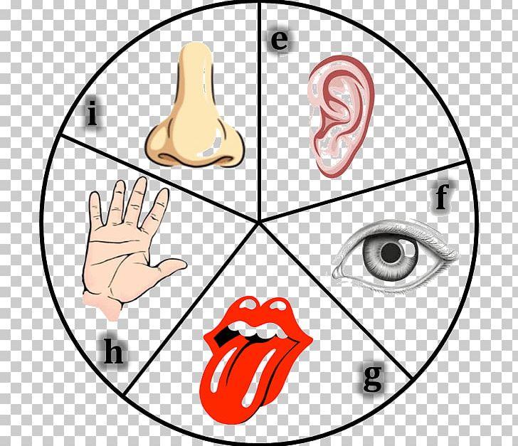 The Five Senses Organ Sensory Nervous System Human Body PNG.