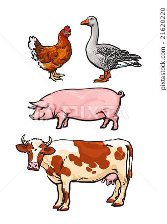 Set of farm animals on the white background.