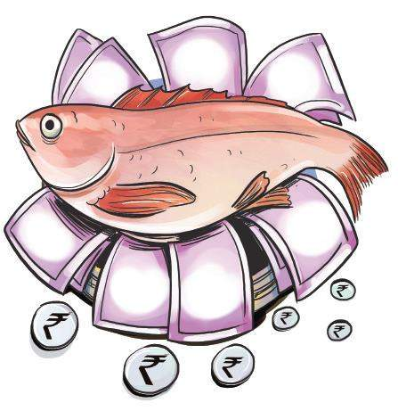 Kochi next host of international seafood expo.