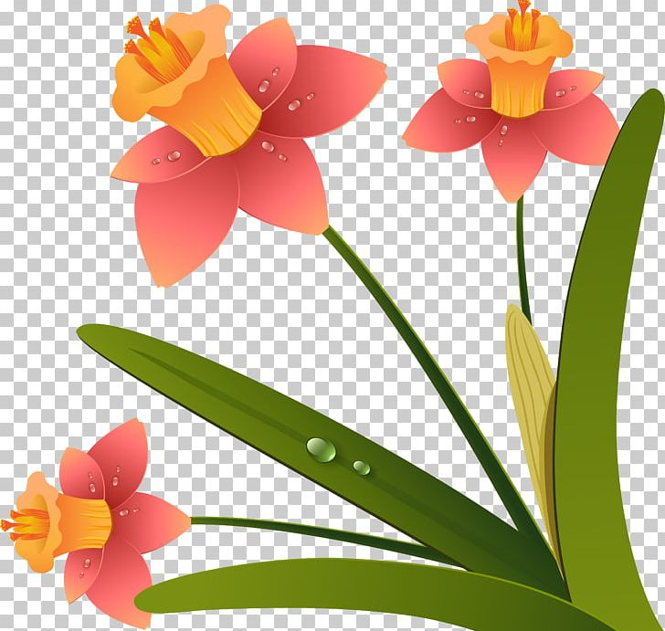 Flower Drawing PNG, Clipart, 2d Computer Graphics, Amaryllis.