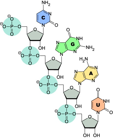 1000+ images about Biochemistry on Pinterest.
