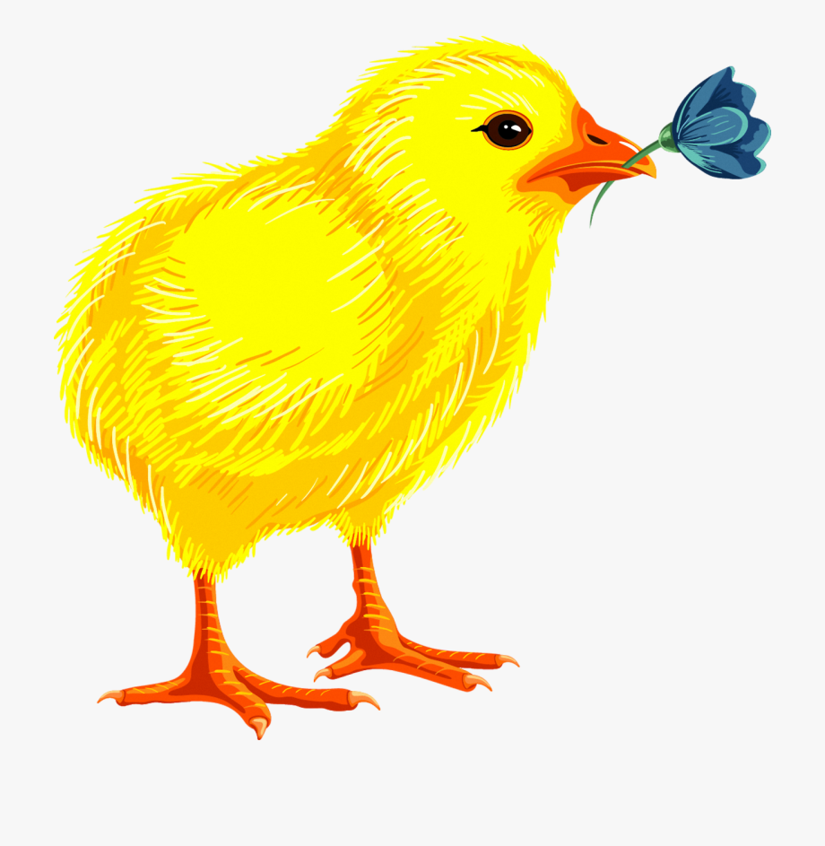 Baby Chicks Clipart , Transparent Cartoon, Free Cliparts.