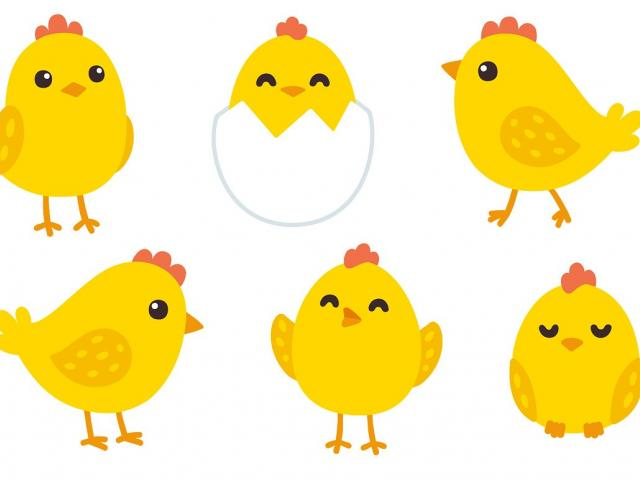Chick clipart baby chick, Chick baby chick Transparent FREE.