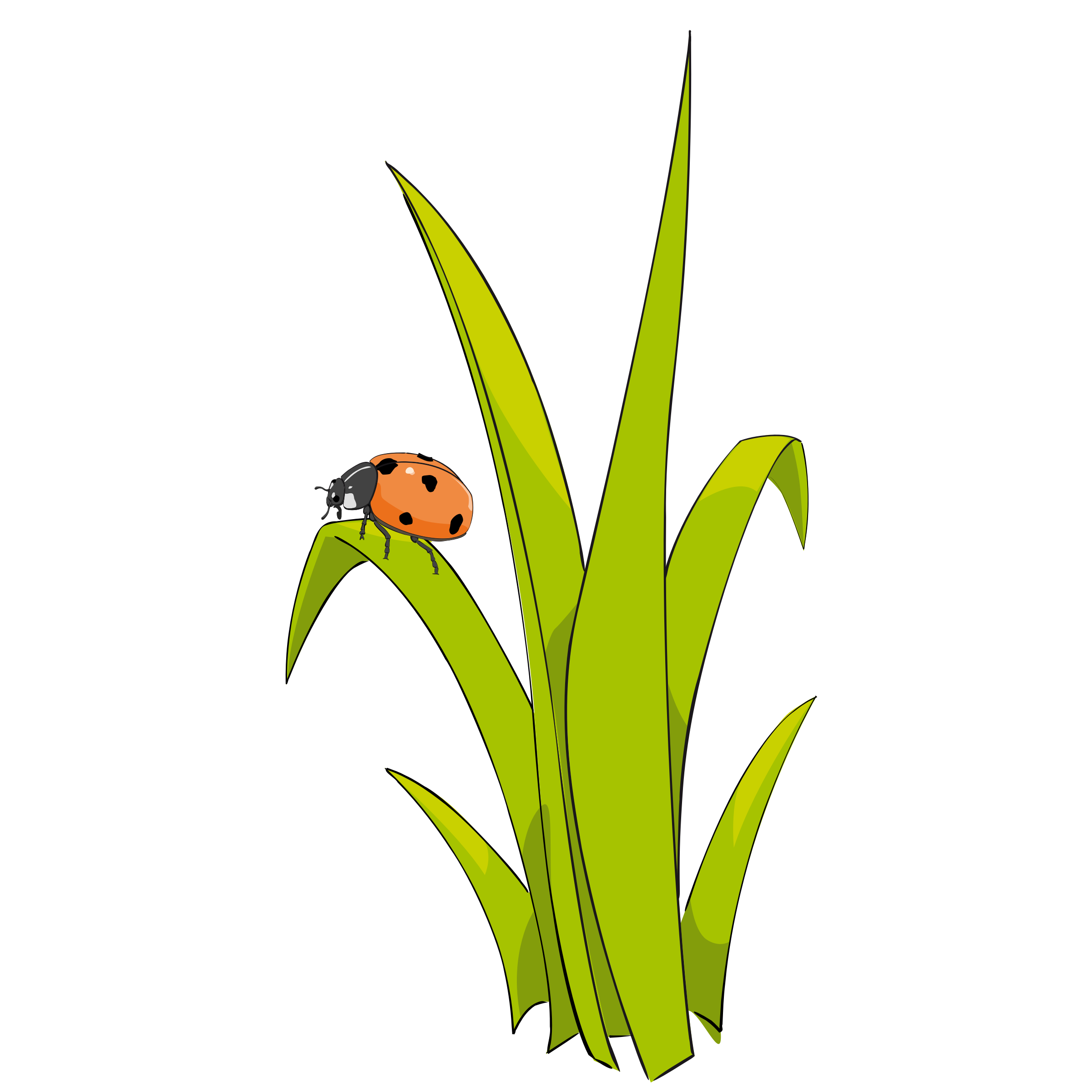 Grass clipart single, Grass single Transparent FREE for.