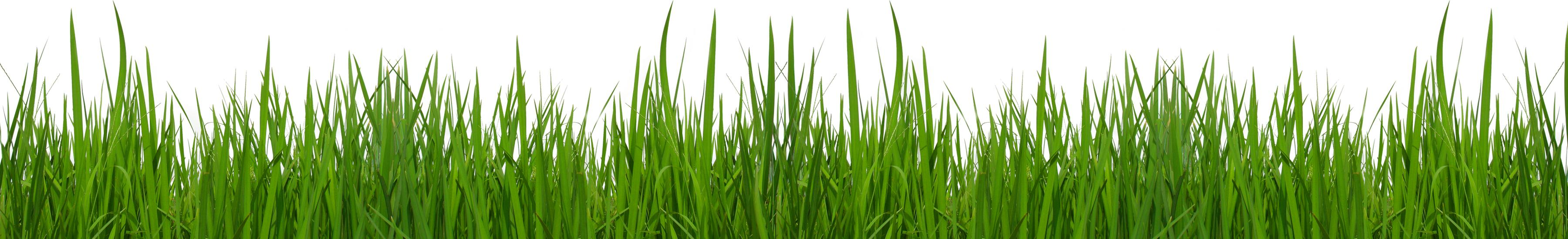 Free Blades Of Grass Png, Download Free Clip Art, Free Clip.