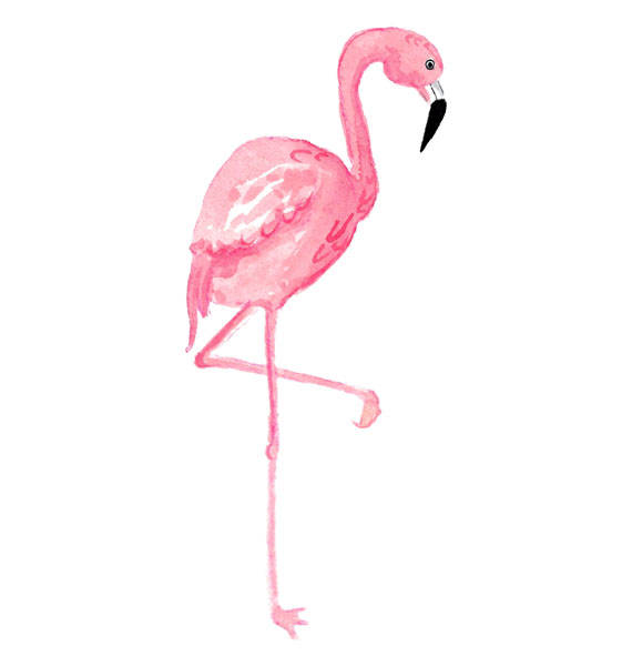 Watercolor Flamingo Clipart, Tropical, Bird, Illustration.