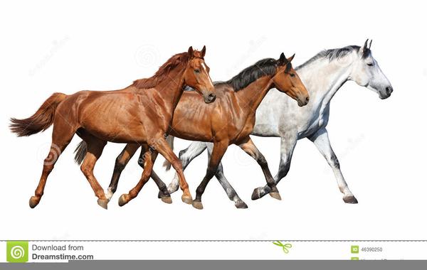 Herd Of Running Horses Clipart.