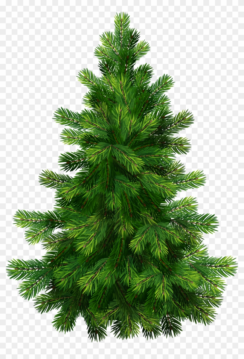 Transparent Pine Tree Png Clipart.