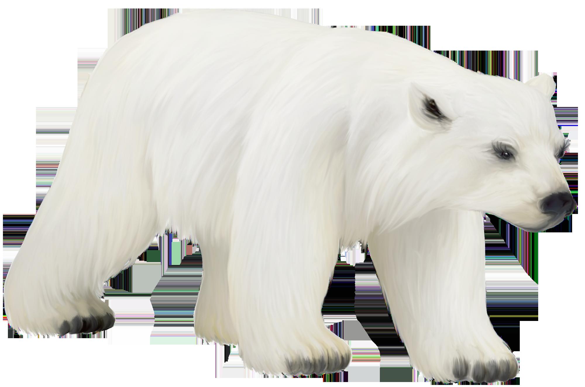 Free Polar Cliparts, Download Free Clip Art, Free Clip Art.