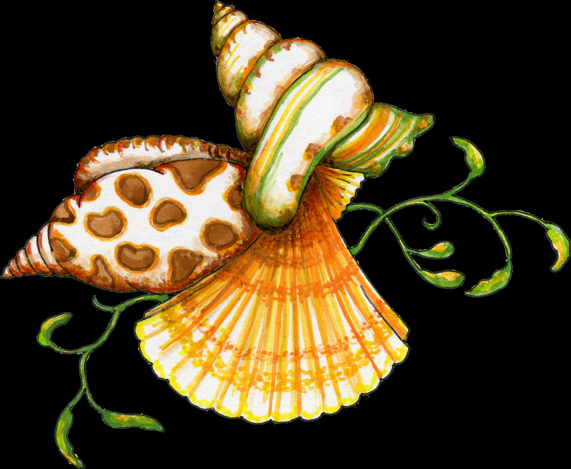 Seashell shell clip art black and white sea shell clipart.