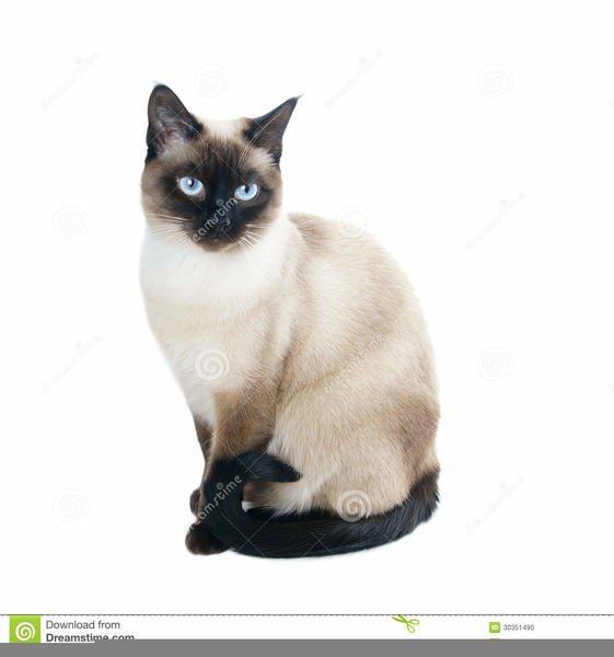 Free Siamese Cat Clipart.