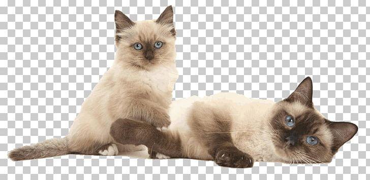 Siamese Cat Birman Ragdoll Balinese Cat Thai Cat PNG.