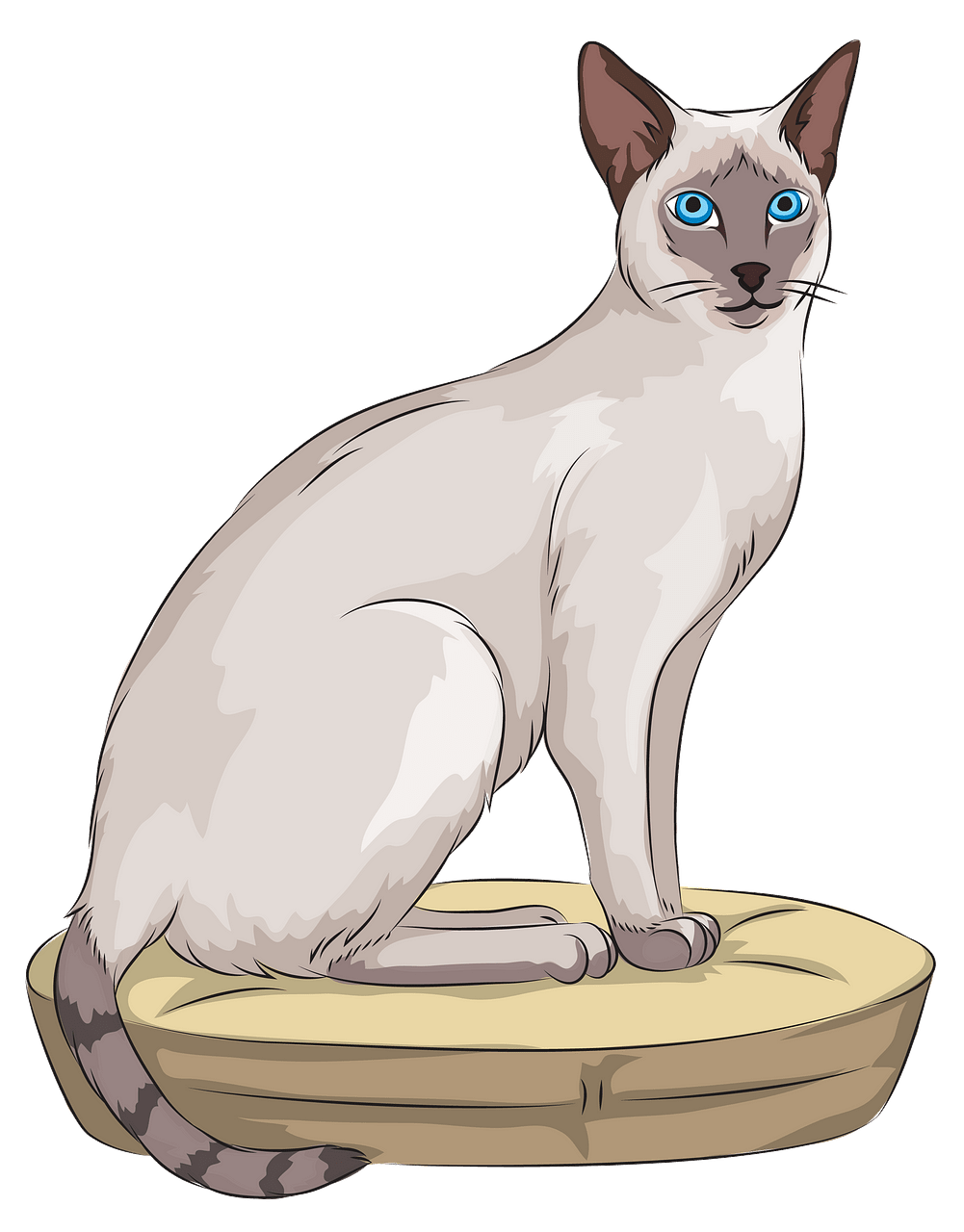 Siamese Cat clipart. Free download..