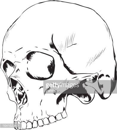 Human Skull 3/4 View premium clipart.
