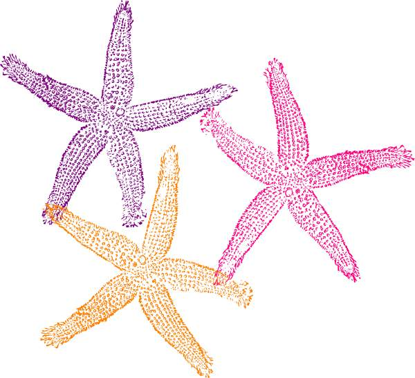 Colorful starfish clip art 2.