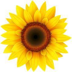 2416 Sunflower free clipart.