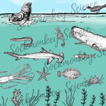 Realistic Ocean Animal Clipart: Marine Ecosystem Line Art.
