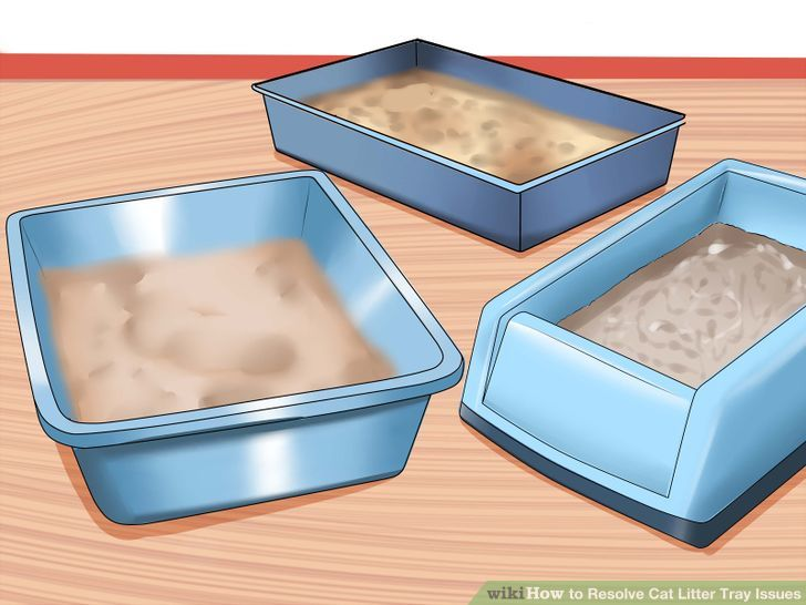 How to Resolve Cat Litter Tray Issues: 13 Steps (with Pictures).
