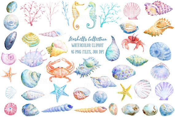 Watercolor Clipart Seashell Collection seashells by.
